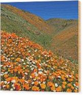 Palmdale Poppies Wood Print