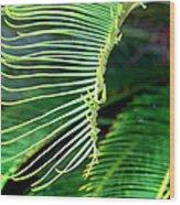 Palme Cycas Wood Print