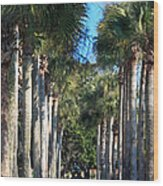 Palmetto Alee Wood Print