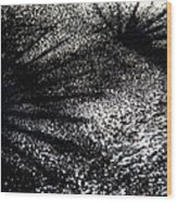 Palmetto Leaves Reflected On Ice Wood Print
