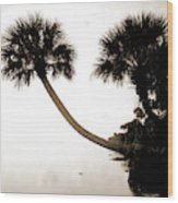 Palmettos Near St Wood Print