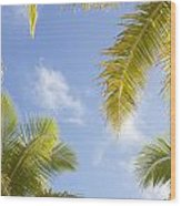 Palms And Sky Wood Print