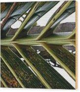 Palms E  Wood Print
