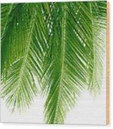 Palms Green Wood Print