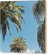 Palms In The Sky Wood Print