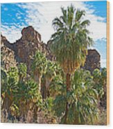 Palms Stand Tall In Andreas Canyon In Indian Canyons-ca Wood Print
