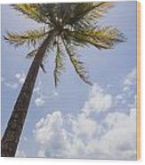 Palms Trees Along Luquillo Beach In Puerto Rico Wood Print