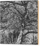 Palo Verde In Black And White Wood Print
