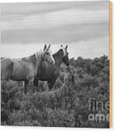 Palomino - Buttes - Wild Horses - Bw Wood Print