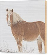 Palomino Horse In The Snow Wood Print