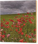 Palouse Poppies Wood Print
