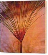 Pampas Grass - II Wood Print