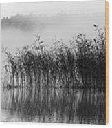 Pampas Grass In Fog Wood Print