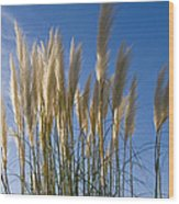 Pampas Grass Wood Print
