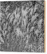 Pampas Grass Monochrome Wood Print