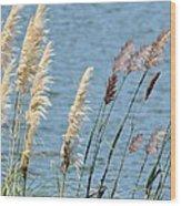 Pampas On The Lake Wood Print