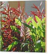 Pam's Garden 10827 Wood Print