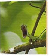 Panacam Green Snake Wood Print