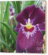 Pancy Orchid Wood Print