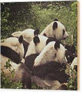 Pandamonium Wood Print by Joan Carroll