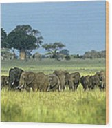 Panorama African Elephant Herd Endangered Species Tanzania Wood Print