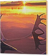 Panorama Caribou Antlers Whitefish Lake Nwt Canada Wood Print