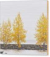 Panorama Tree Wood Print