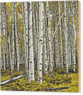 Panoramic Birch Tree Forest Wood Print