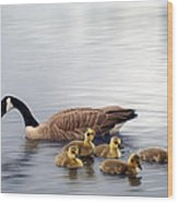 Panoramic Goose Family Outing Wood Print