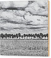Panoramic Noir Wood Print
