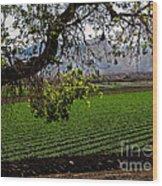 Panoramic Of Winter Lettuce Wood Print