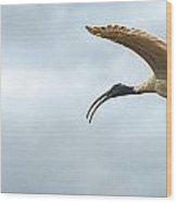 Panoramic Photo Of Flying Ibis Wood Print