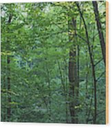 Panoramic Shot With Green Trees Wood Print