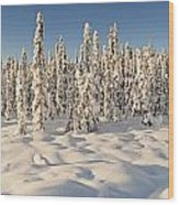 Panoramic View Of Snow-covered Spruce Wood Print