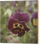 Pansy Beauty Photograph Wood Print