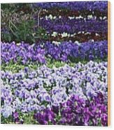 Pansy Field Wood Print