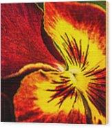 Pansy Flower 5 Wood Print