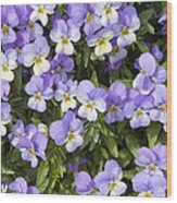Pansy Flowers In Spring Background Wood Print