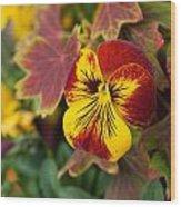 Pansy Flowers Wood Print