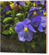 Pansy Planter Wood Print