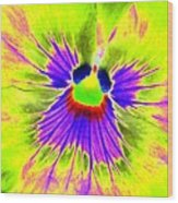 Pansy Power 59 Wood Print