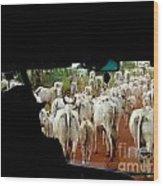 Pantenal Cows Wood Print