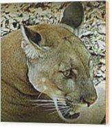 Panther Wood Print