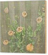 Papaver Orientale 5 Wood Print