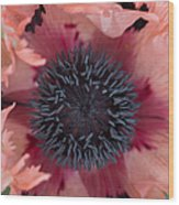 Papaver Orientale Pink Ruffles Wood Print