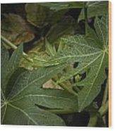 Papaya Leaves Wood Print