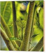 Papaya Shoot Wood Print