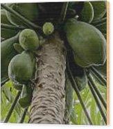 Papaya Tree Wood Print