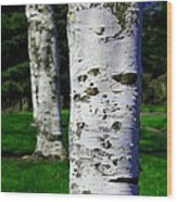 Paper Birch Trees Wood Print