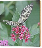 Paper Kite Butterfly - 2 Wood Print